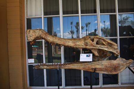 Tucson Fossil Show - February 2010