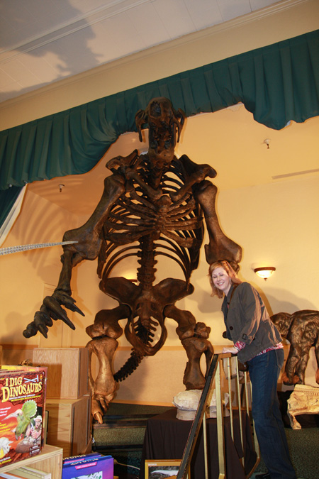 Giant Sloth Fossil