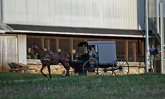 Amish Horse and Buggy - June 21st, 2013