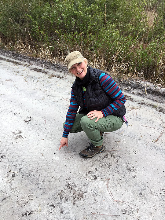 Third Osceola Meteorite Find - Laura Atkins